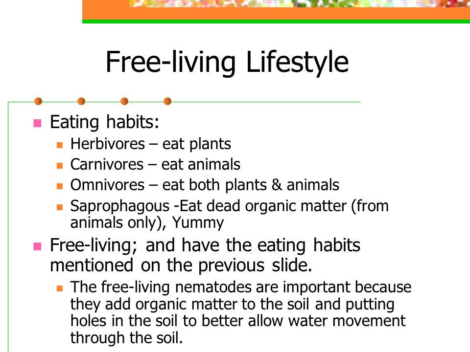 Free-living Lifestyle