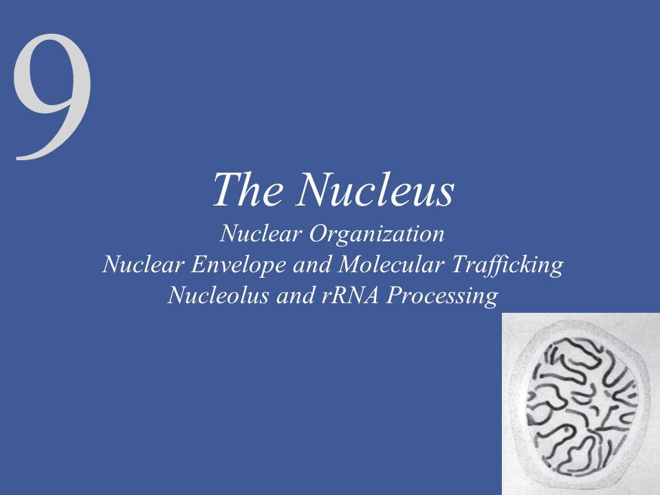 The Nucleus Nuclear Organization Nuclear Envelope and Molecular Trafficking Nucleolus and rRNA Processing