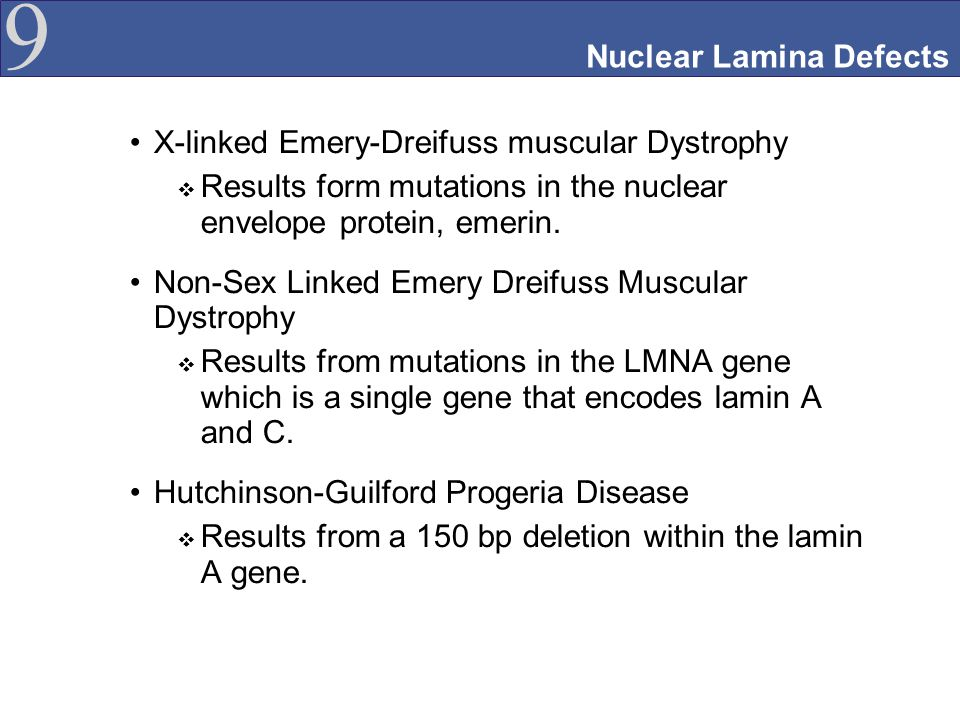 Nuclear Lamina Defects