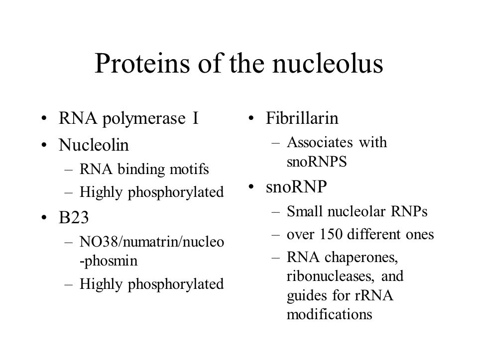 Proteins of the nucleolus