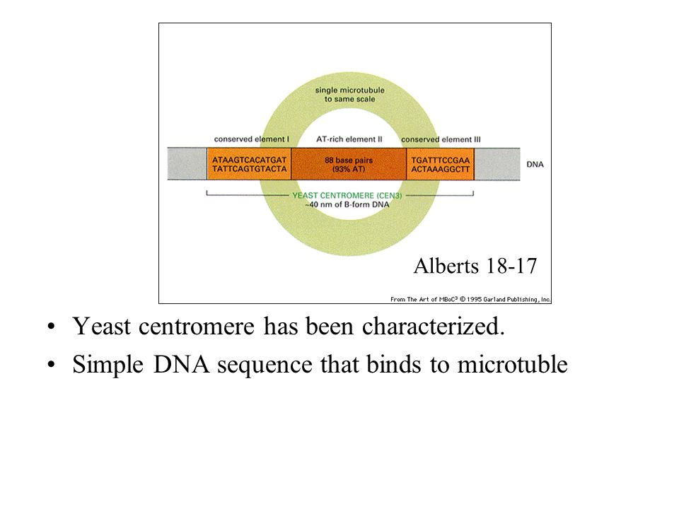 Yeast centromere has been characterized.