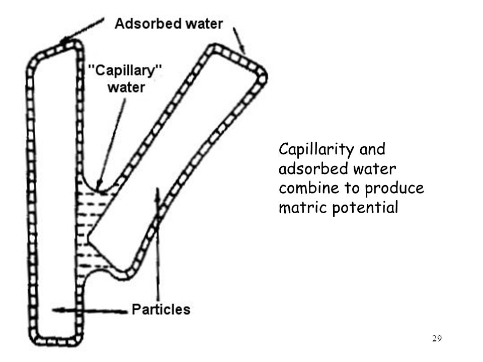 Capillarity and adsorbed water combine to produce matric potential