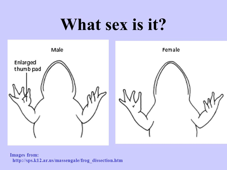 What sex is it Images from: