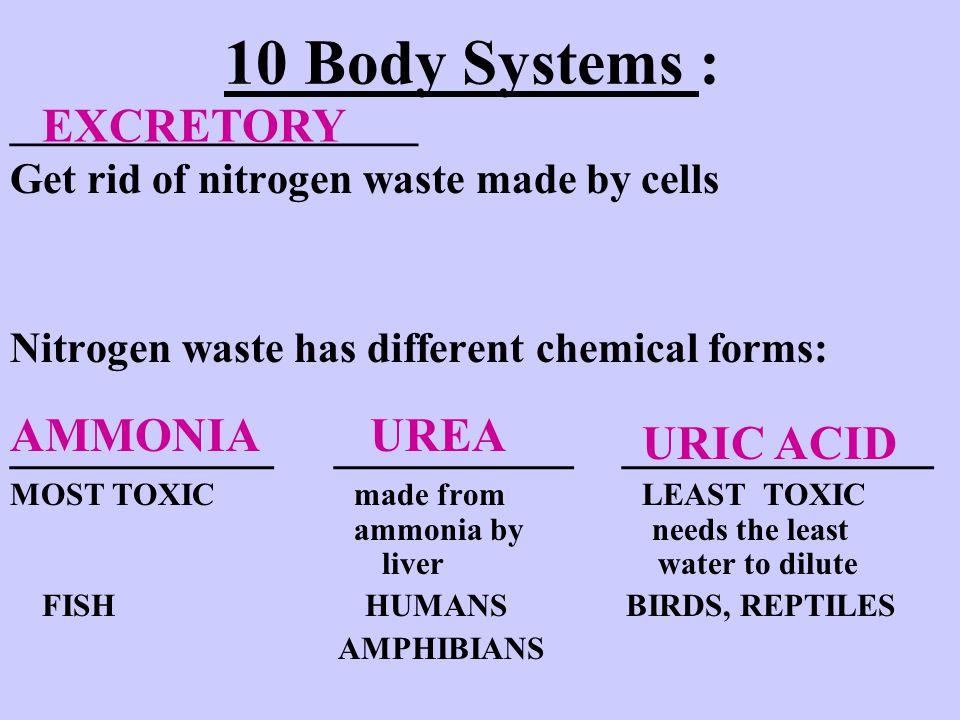 10 Body Systems : ___________ __________ _____________ EXCRETORY