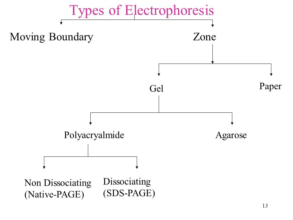 Types of Electrophoresis
