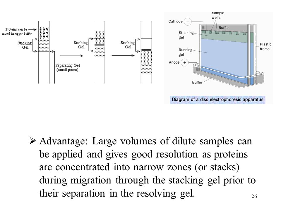 Advantage: Large volumes of dilute samples can be applied and gives good resolution as proteins are concentrated into narrow zones (or stacks) during migration through the stacking gel prior to their separation in the resolving gel.
