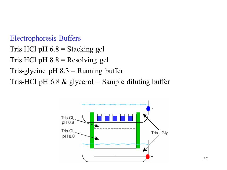 Electrophoresis Buffers
