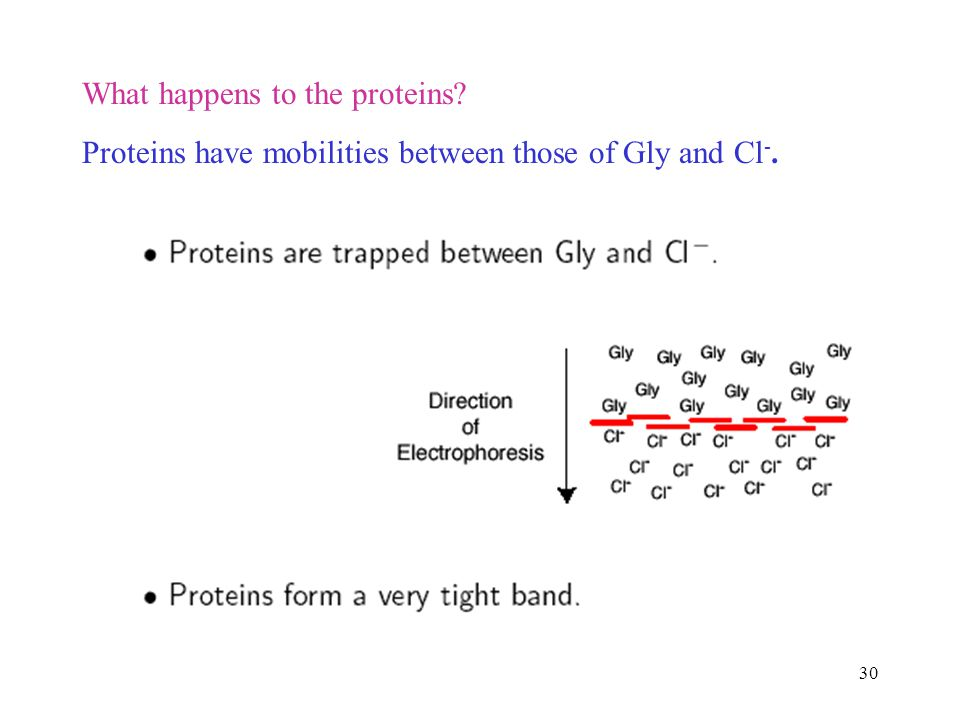 What happens to the proteins