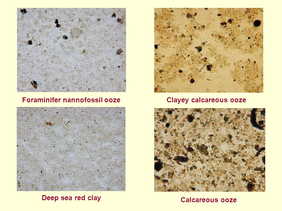 Clayey calcareous ooze
