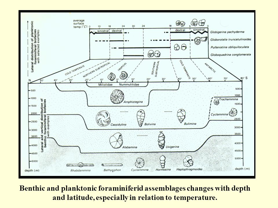 Benthic and planktonic foraminiferid assemblages changes with depth and latitude, especially in relation to temperature.