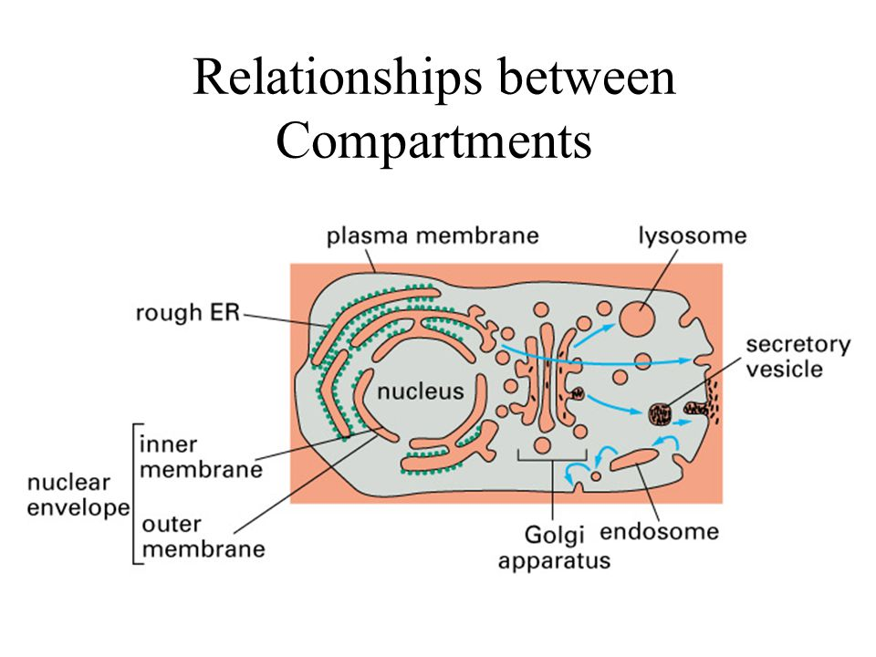 Relationships between Compartments