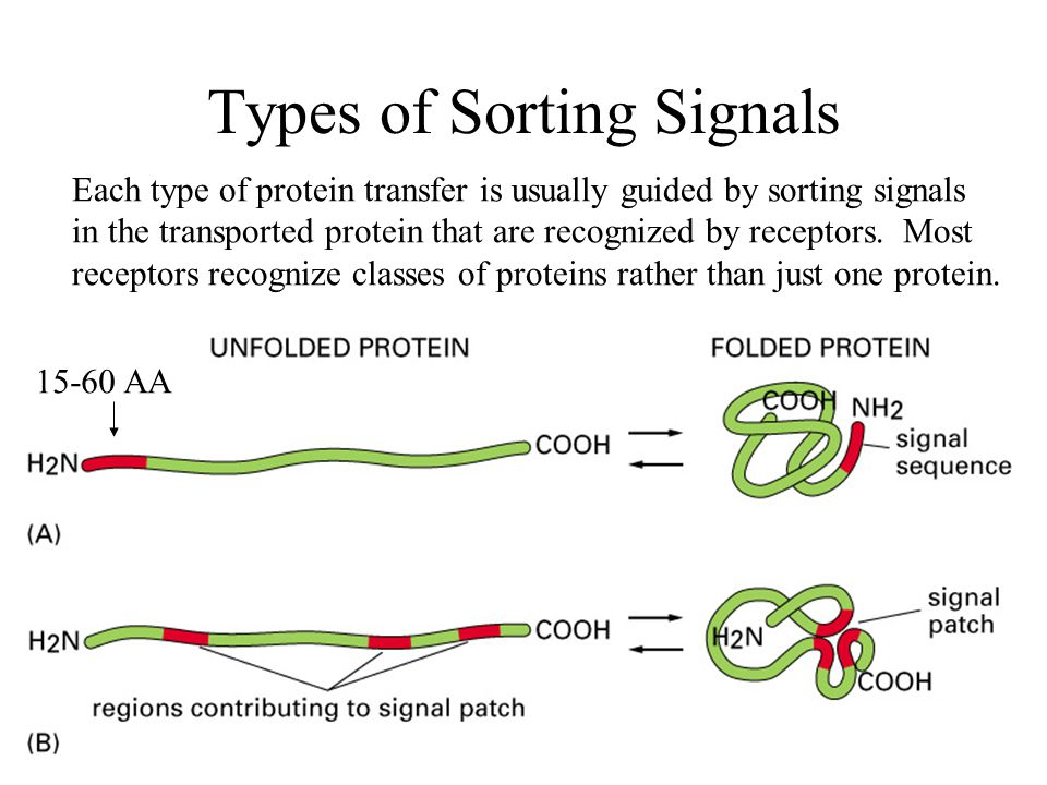 Types of Sorting Signals