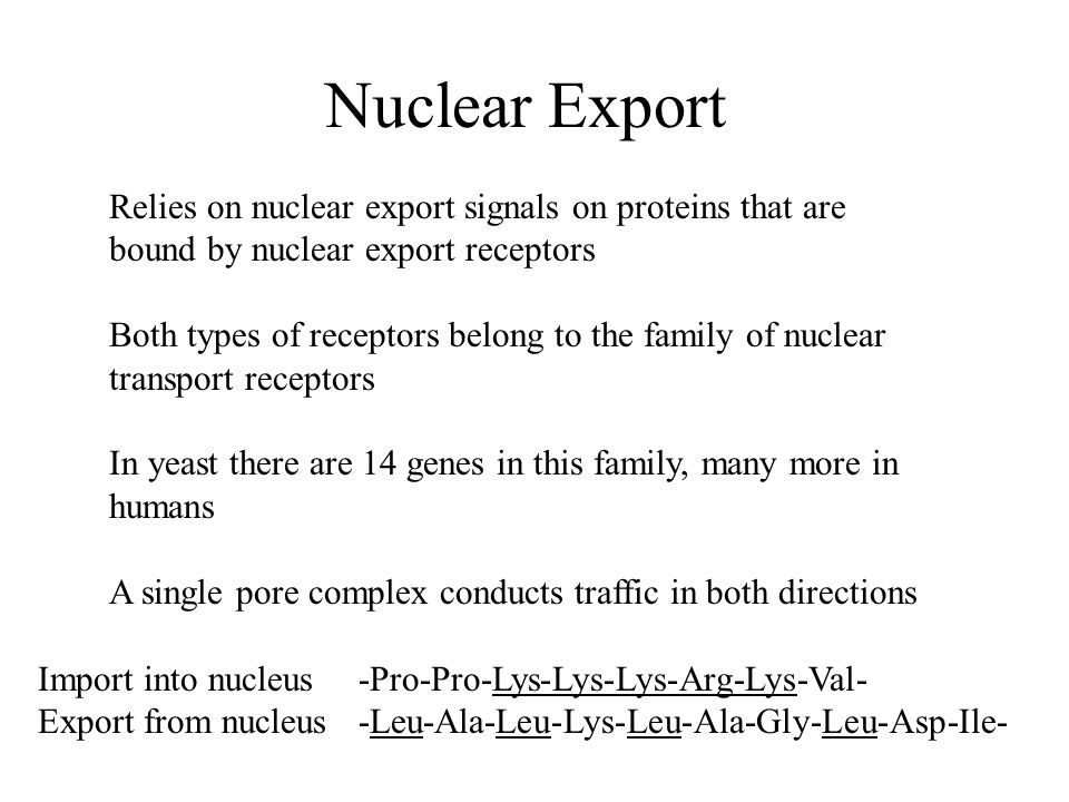 Nuclear Export Relies on nuclear export signals on proteins that are bound by nuclear export receptors.