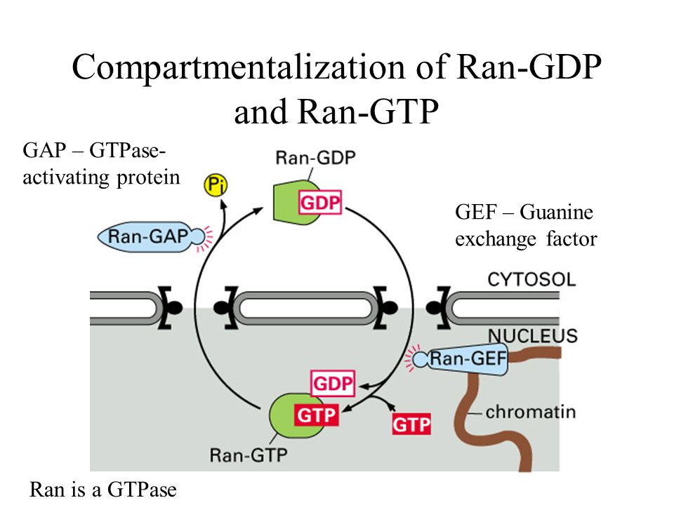 Compartmentalization of Ran-GDP and Ran-GTP