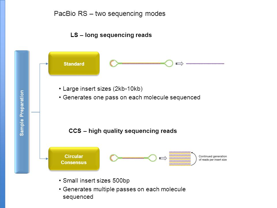 LS – long sequencing reads CCS – high quality sequencing reads