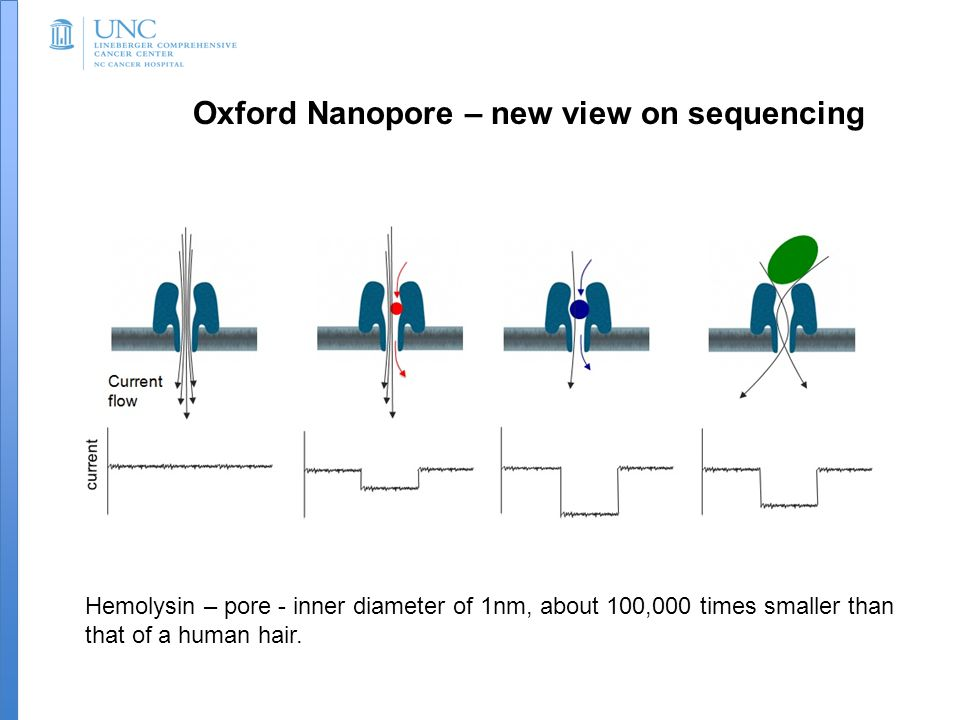 Oxford Nanopore – new view on sequencing