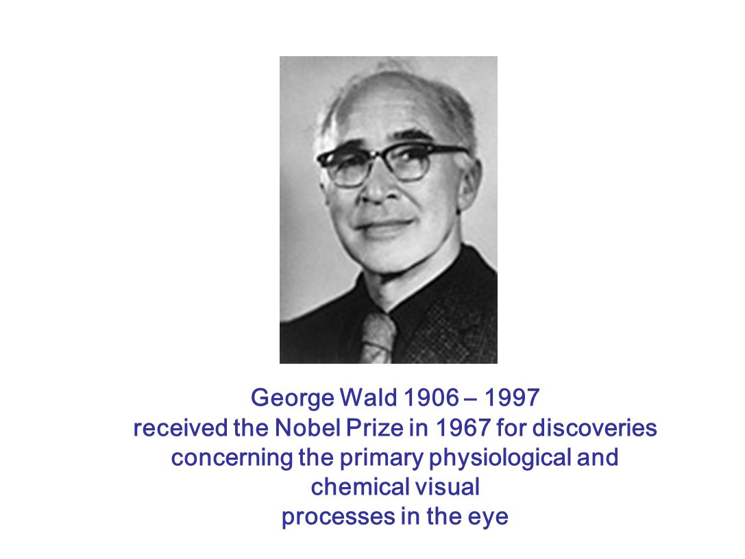 George Wald 1906 – 1997 received the Nobel Prize in 1967 for discoveries concerning the primary physiological and chemical visual.