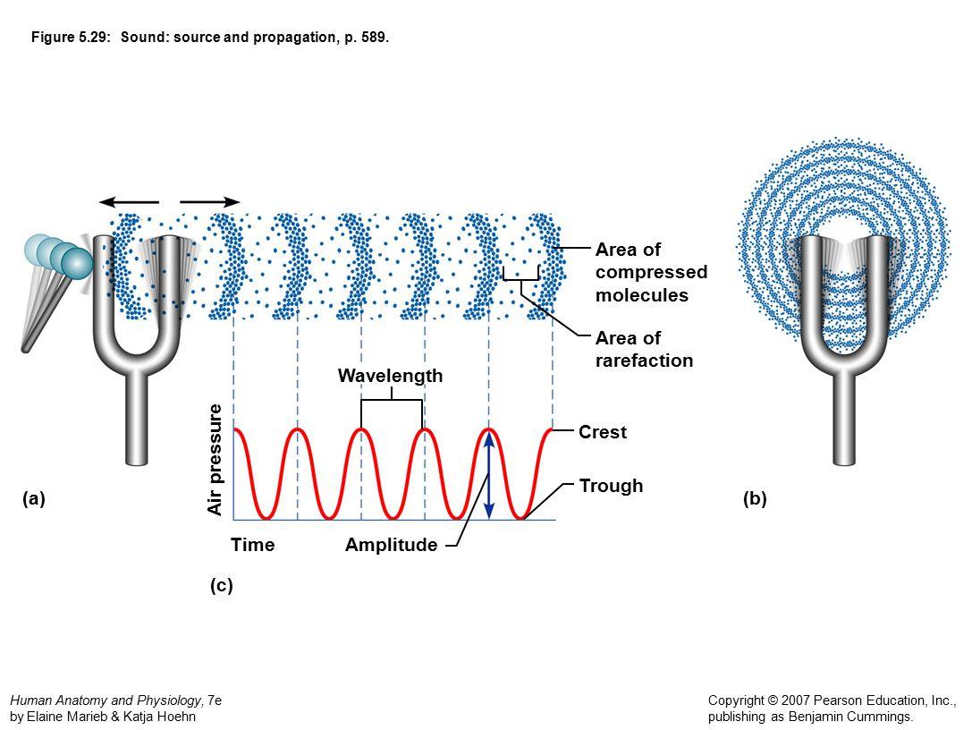 Figure 5.29: Sound: source and propagation, p. 589.
