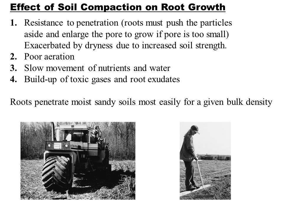effect of soil compaction on root Soil compaction negatively affects the soil and growing vegetation  the soil  which often results in reduced root growth and reduced ability to take up water  and.