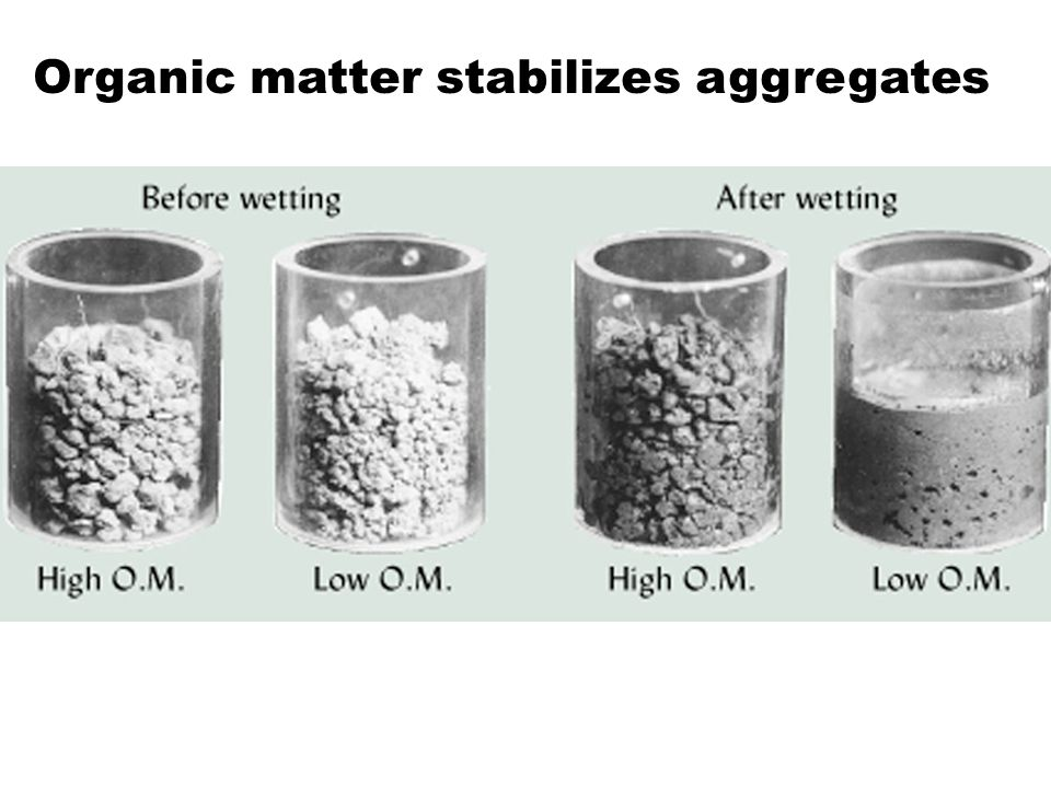 Organic matter stabilizes aggregates