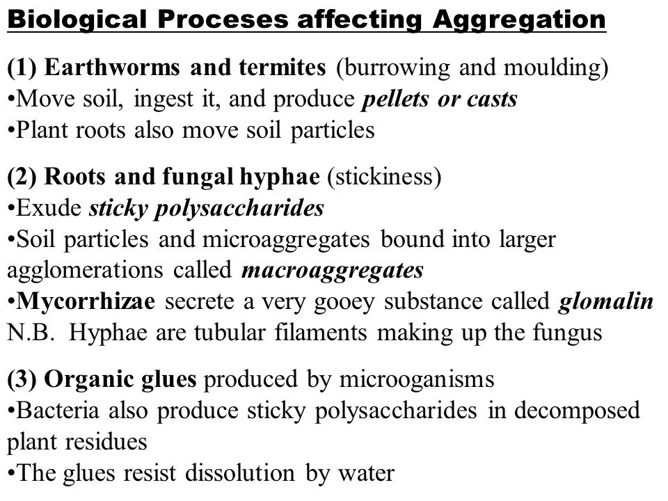 Biological Proceses affecting Aggregation