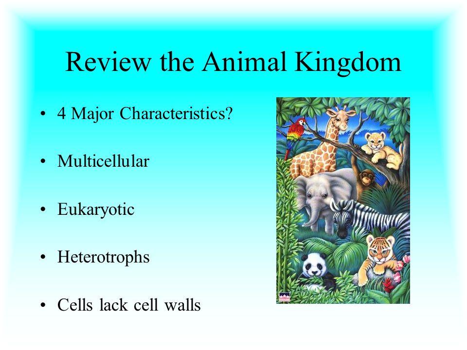 Review the Animal Kingdom