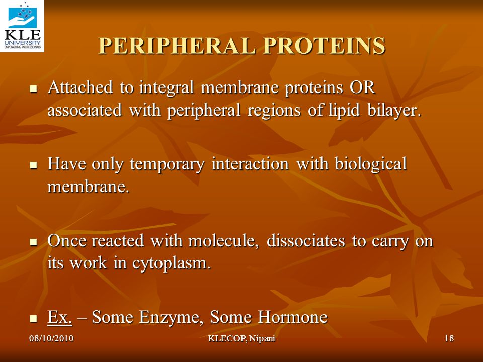 PERIPHERAL PROTEINS Attached to integral membrane proteins OR associated with peripheral regions of lipid bilayer.