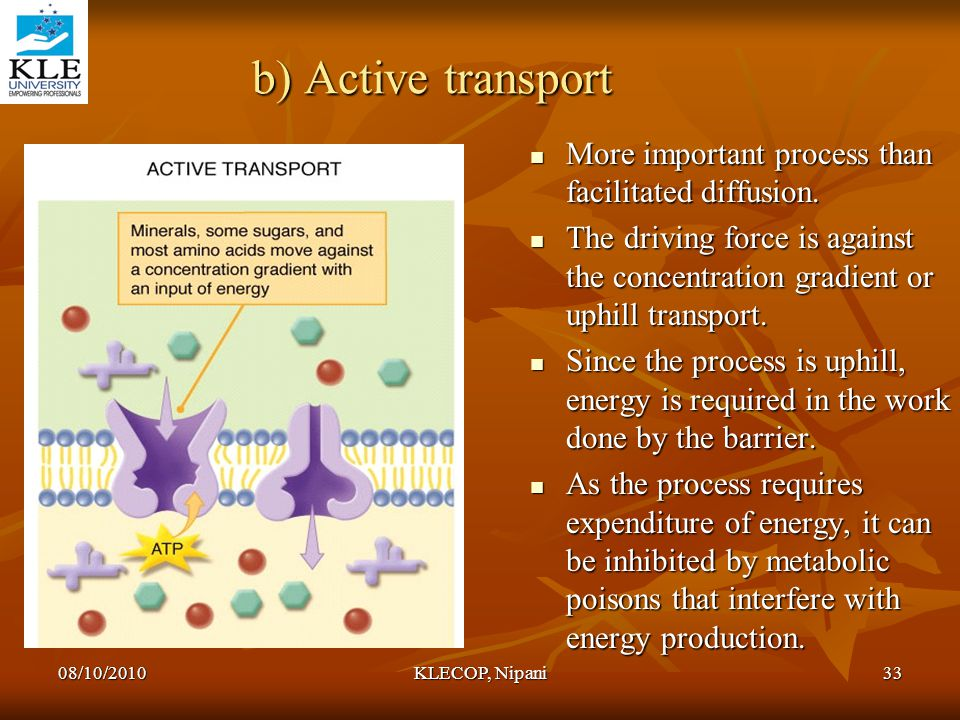 b) Active transport More important process than facilitated diffusion.
