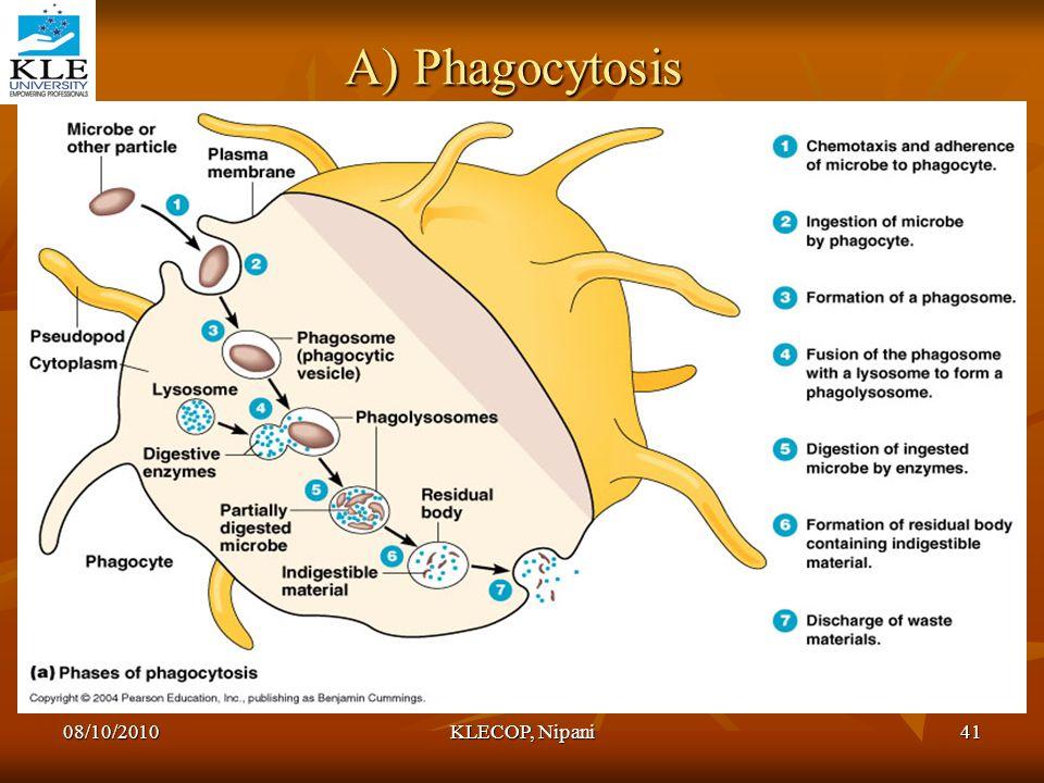 A) Phagocytosis 08/10/2010 KLECOP, Nipani