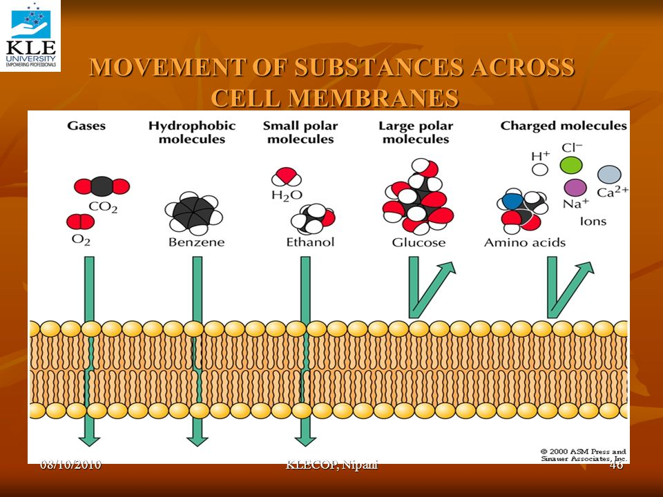 MOVEMENT OF SUBSTANCES ACROSS CELL MEMBRANES