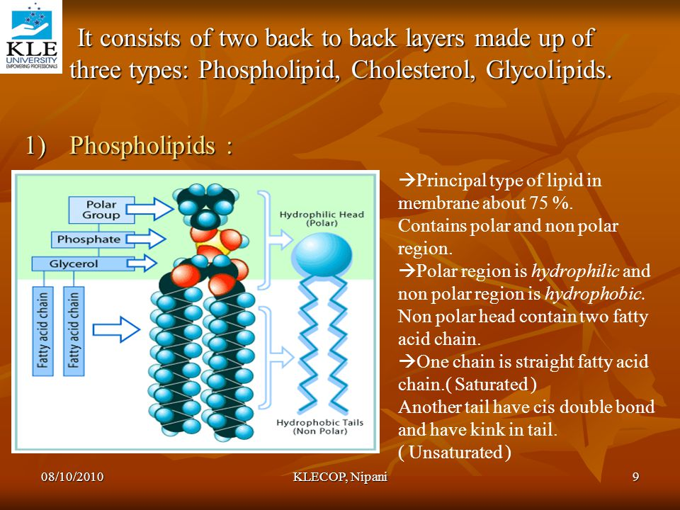 It consists of two back to back layers made up of three types: Phospholipid, Cholesterol, Glycolipids.