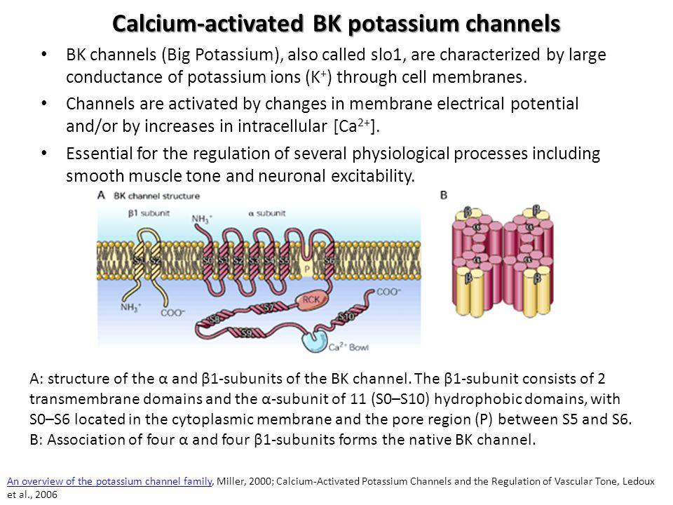 Calcium-activated BK potassium channels