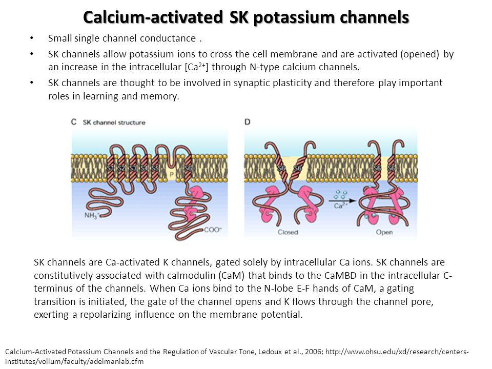Calcium-activated SK potassium channels