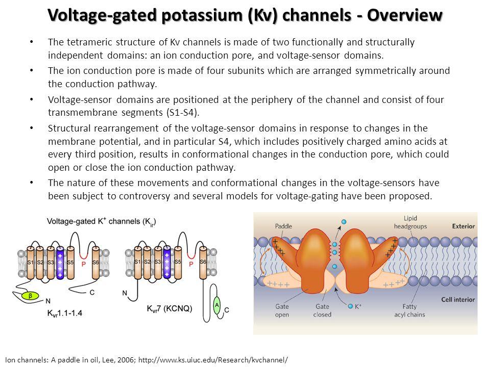 Voltage-gated potassium (Kv) channels - Overview