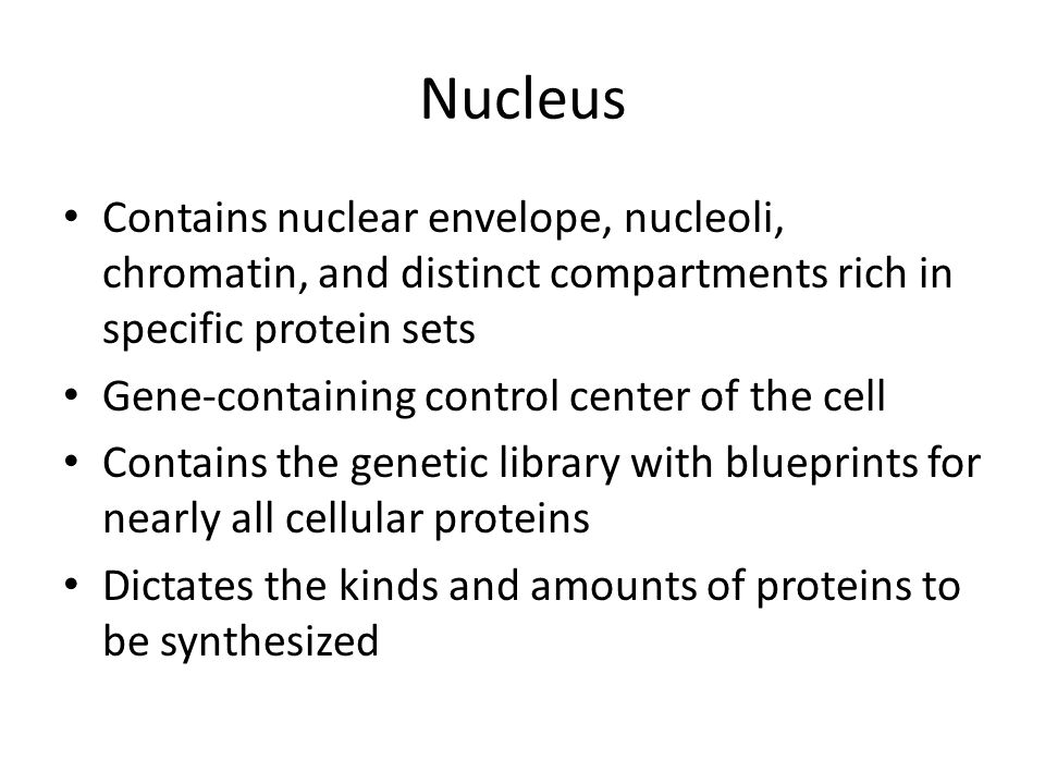 Nucleus Contains nuclear envelope, nucleoli, chromatin, and distinct compartments rich in specific protein sets.