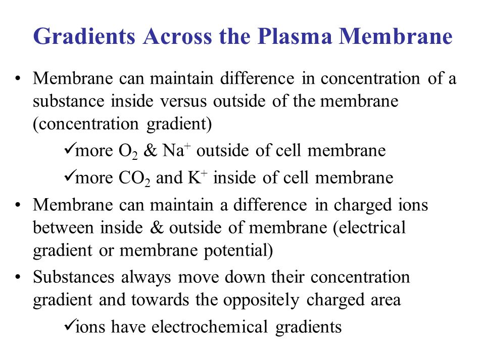 Gradients Across the Plasma Membrane