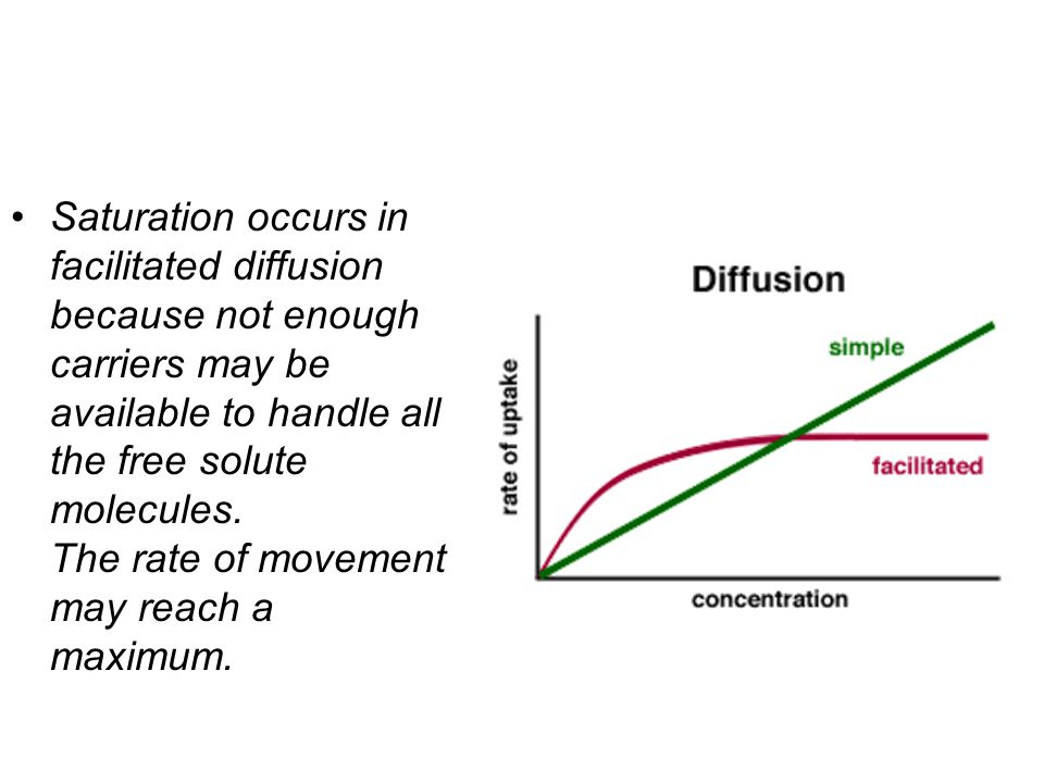 Saturation occurs in facilitated diffusion because not enough carriers may be available to handle all the free solute molecules.
