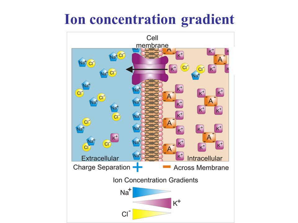 Ion concentration gradient