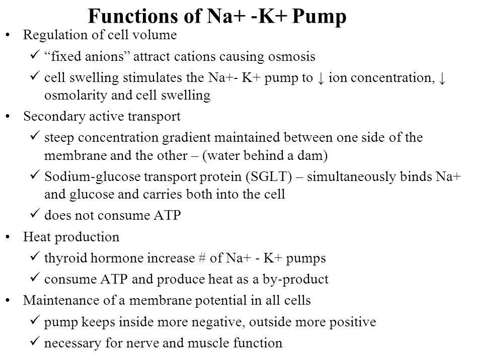 Functions of Na+ ‐K+ Pump