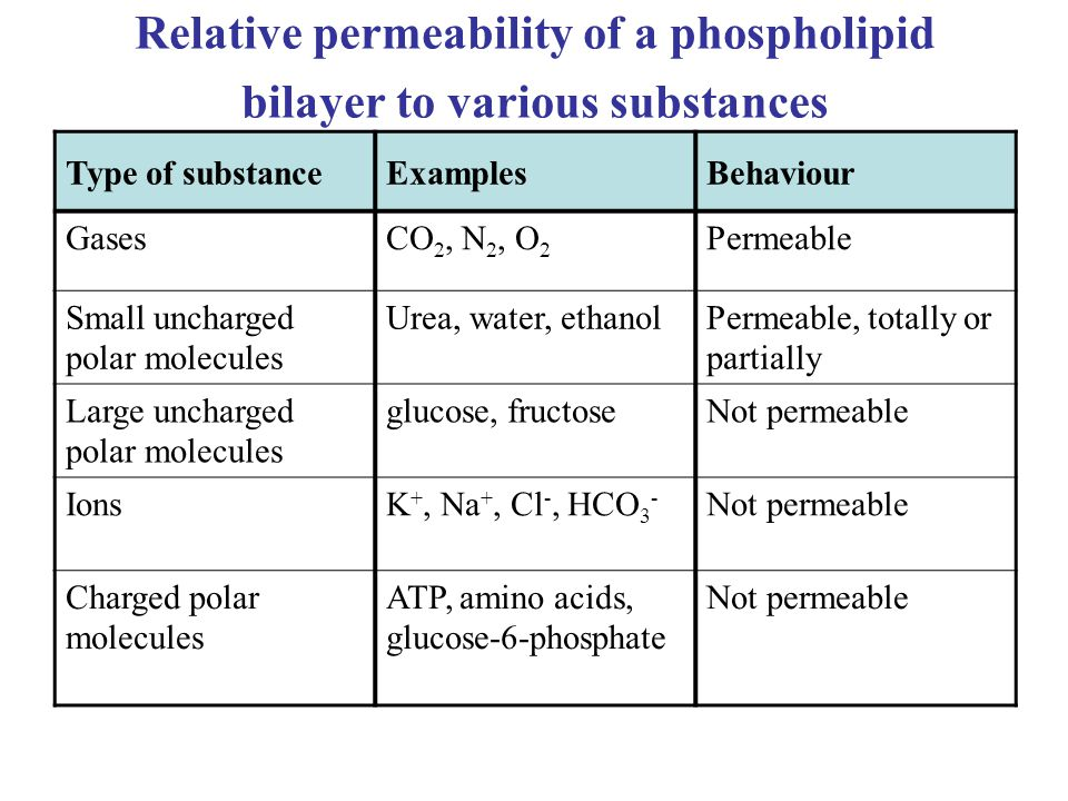 Relative permeability of a phospholipid bilayer to various substances
