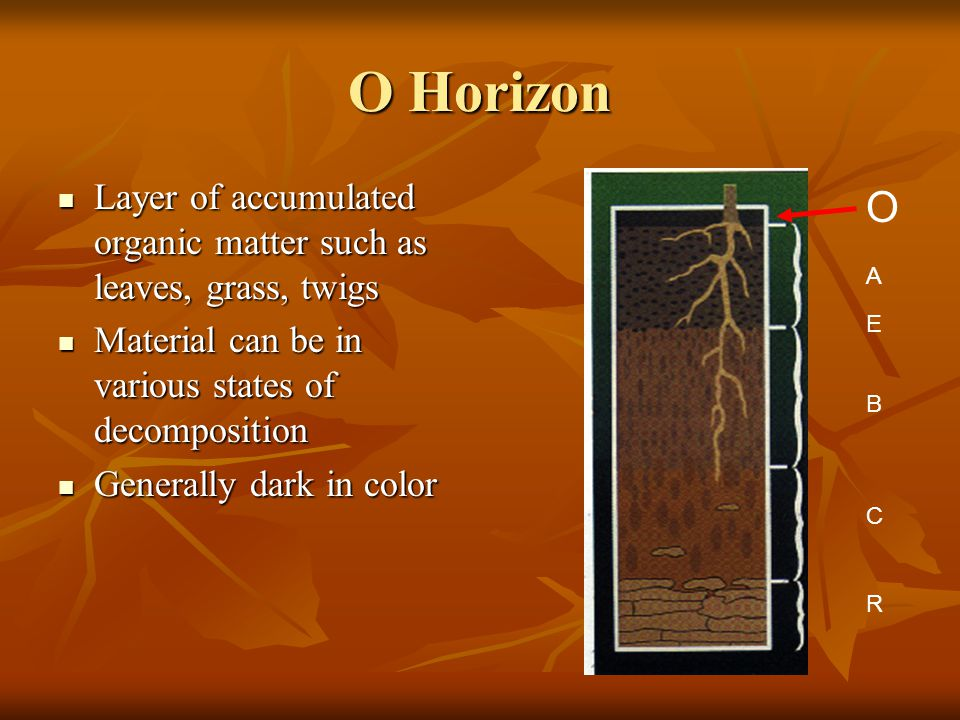 O Horizon Layer of accumulated organic matter such as leaves, grass, twigs. Material can be in various states of decomposition.