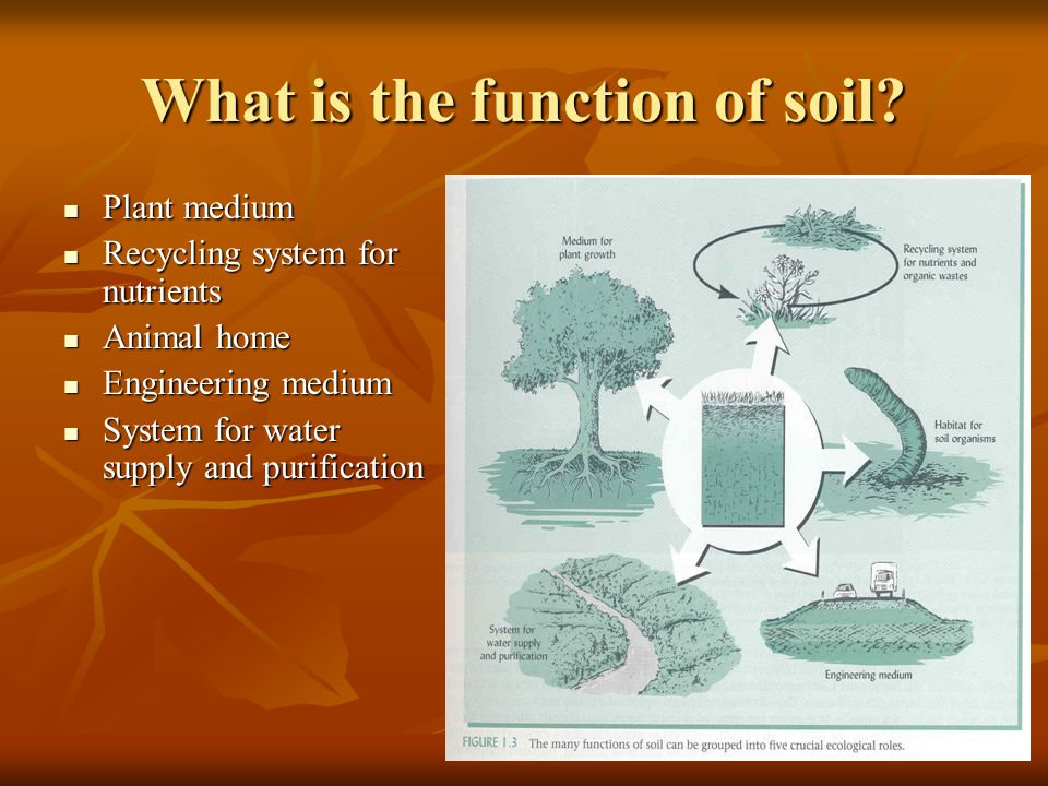 What is the function of soil