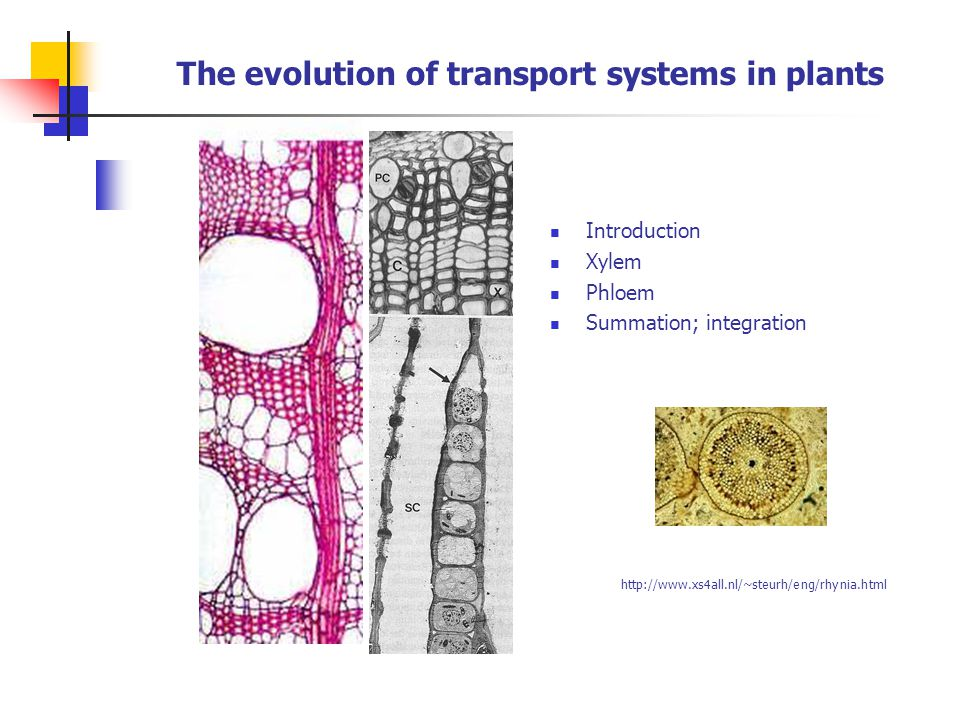 The evolution of transport systems in plants