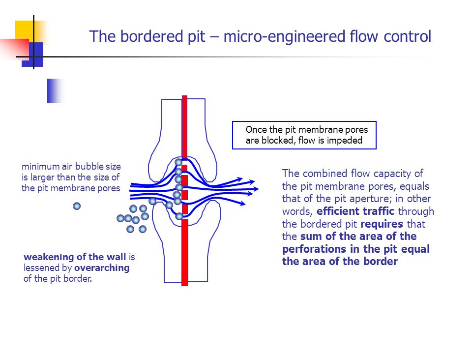 The bordered pit – micro-engineered flow control