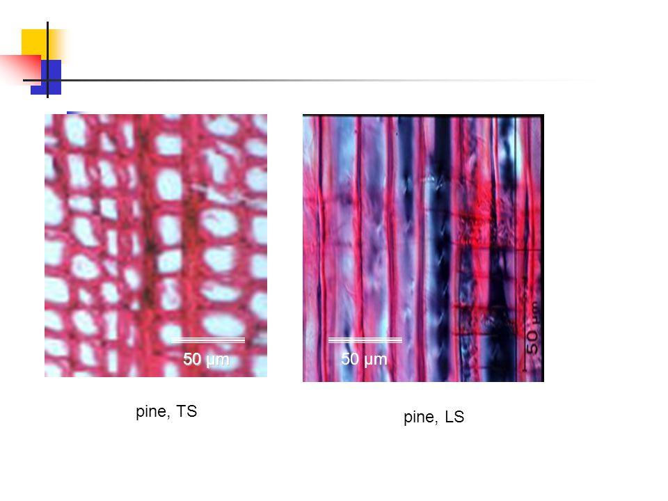 50 µm 50 µm pine, TS pine, LS