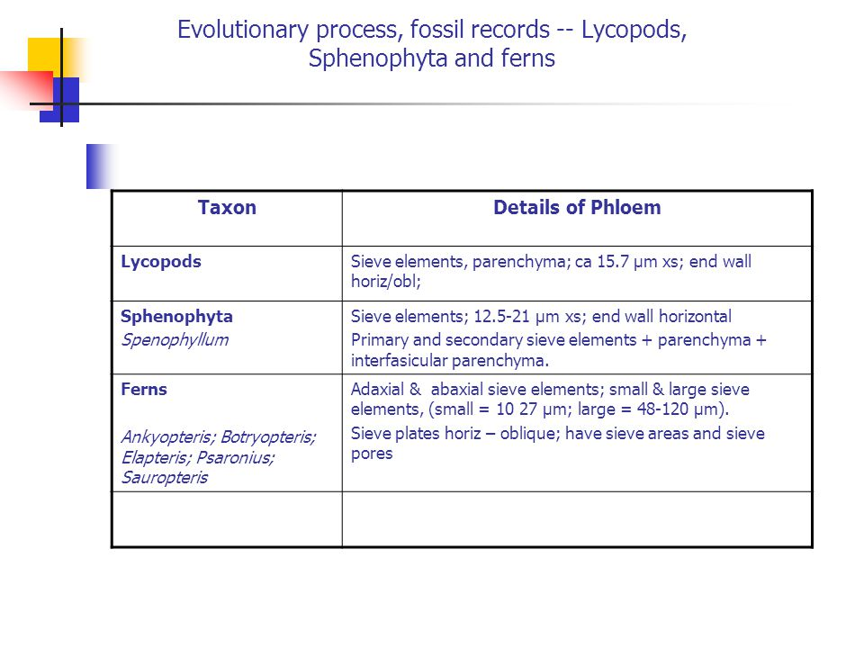 Evolutionary process, fossil records -- Lycopods, Sphenophyta and ferns