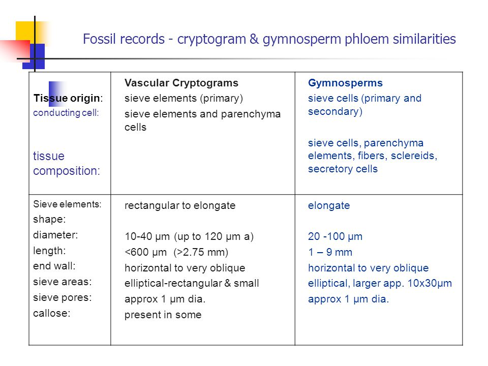 Fossil records - cryptogram & gymnosperm phloem similarities