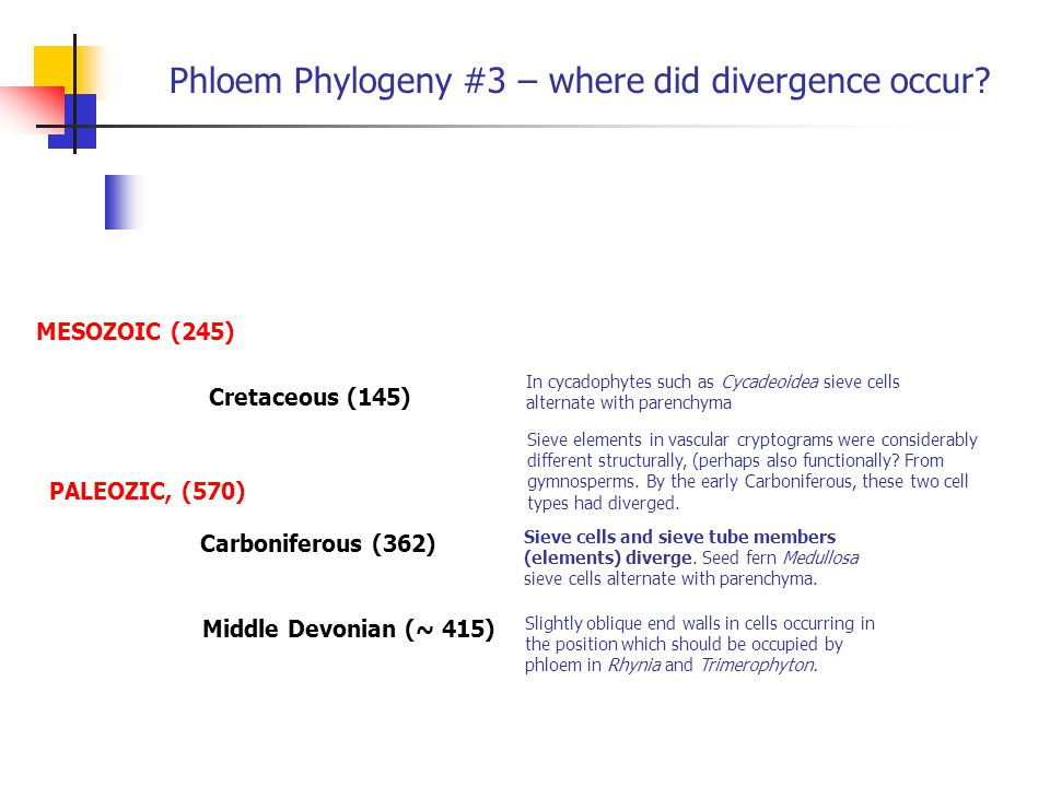 Phloem Phylogeny #3 – where did divergence occur