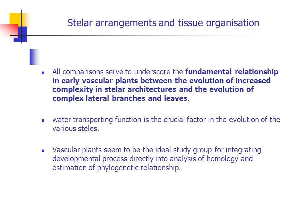 Stelar arrangements and tissue organisation