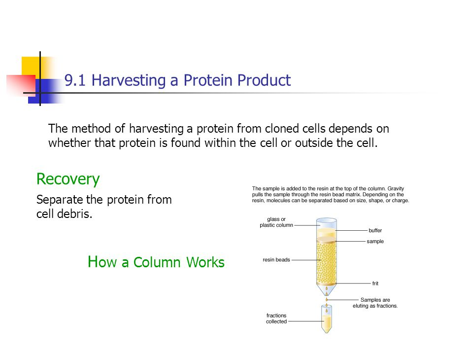 9.1 Harvesting a Protein Product